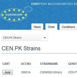 Euroscarf [Website]